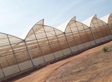 Ferme agro-sylvo-pastorale & pisciculture(Djoliba)